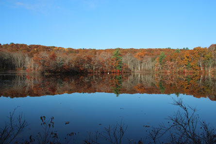 Stump Pond